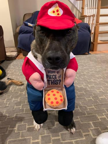 BANDIT (Pizza Delivery Boy)